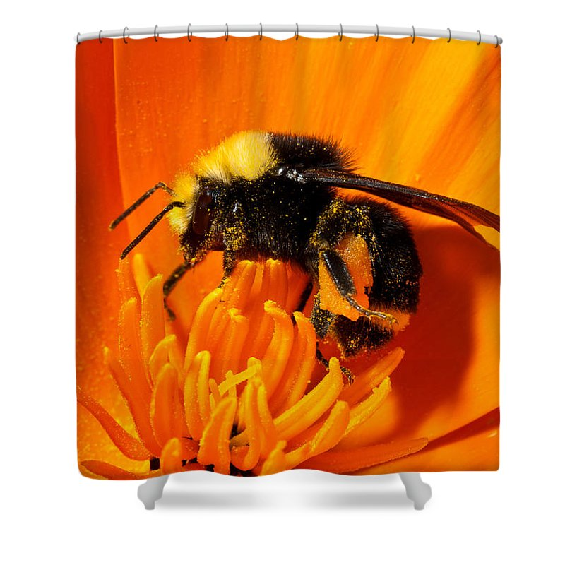 Insect Shower Curtain featuring the photograph Bumblebee On Flower by Greg Nyquist