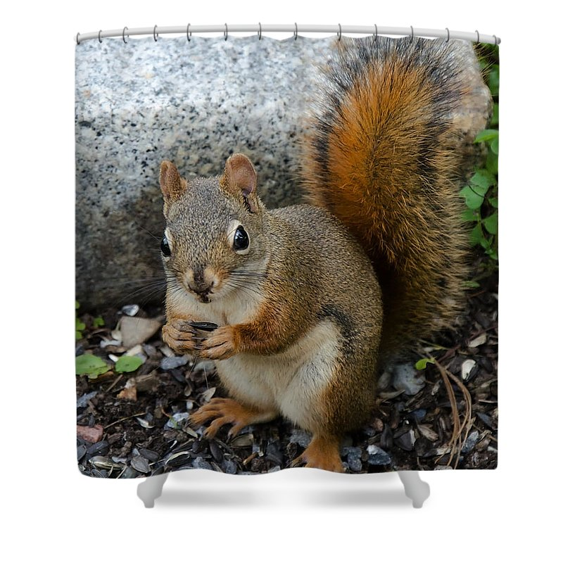 Squirrel Shower Curtain featuring the photograph Bushy Tail by Jeff Galbraith