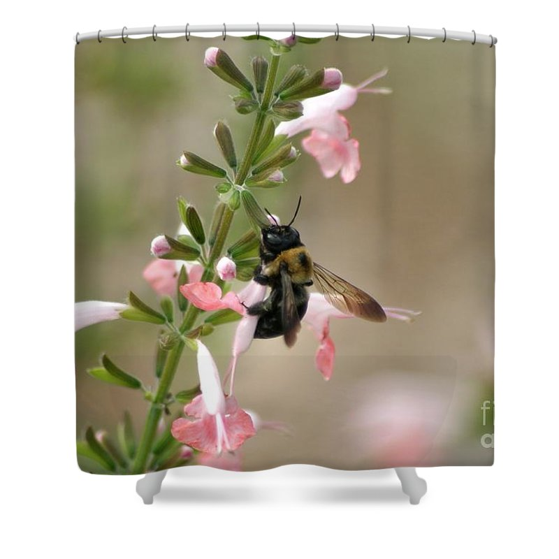 Bee Shower Curtain featuring the photograph Busy Bee by Living Color Photography Lorraine Lynch