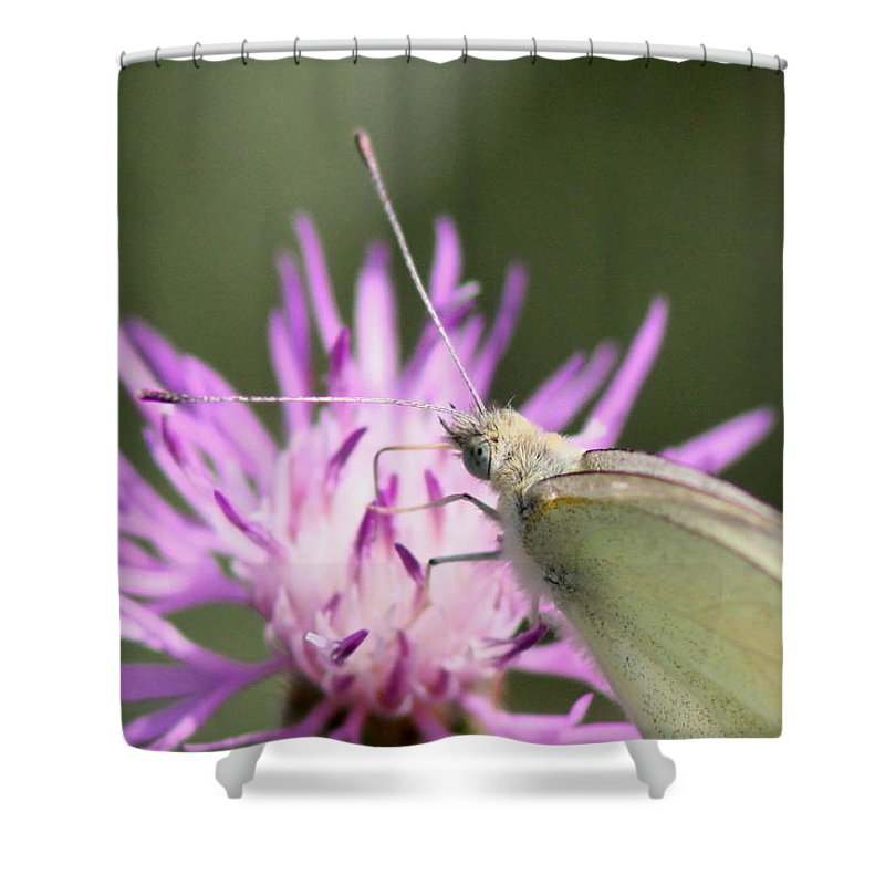 Swallowtail Butterfly Shower Curtain featuring the photograph Butterfly - Plain And Simple by Travis Truelove