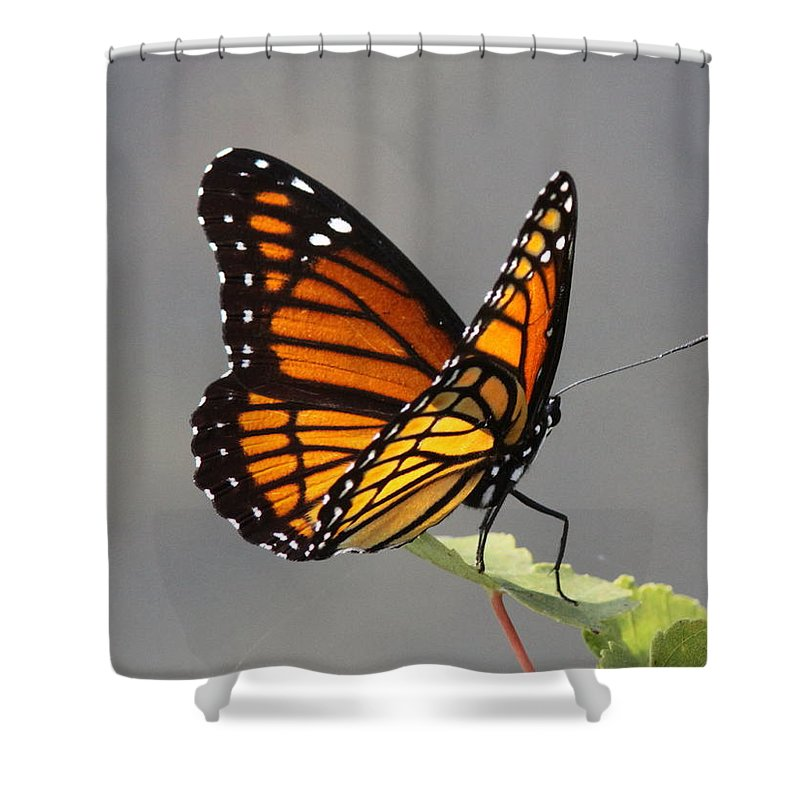 Viceroy Shower Curtain featuring the photograph Butterfly - Sitting On The Green by Travis Truelove