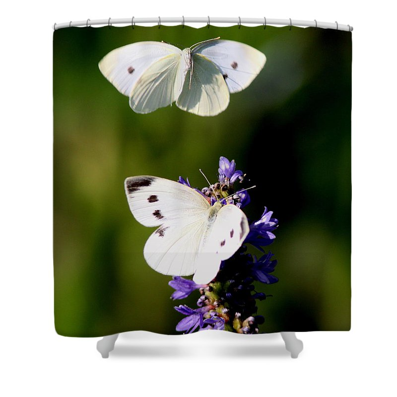 Yellow Cabbage Butterfly Shower Curtain featuring the photograph Butterfly - Visiting by Travis Truelove