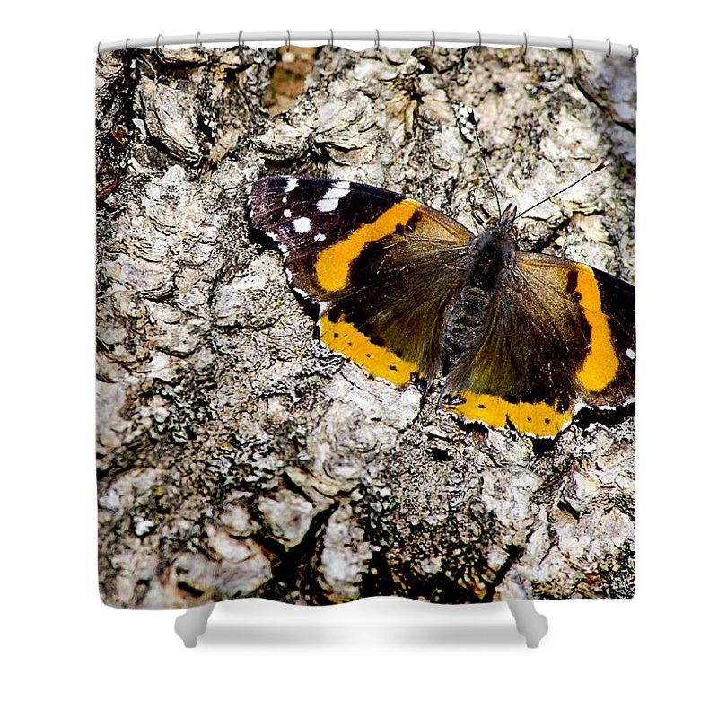 Usa Shower Curtain featuring the photograph Butterfly Bark by LeeAnn McLaneGoetz McLaneGoetzStudioLLCcom
