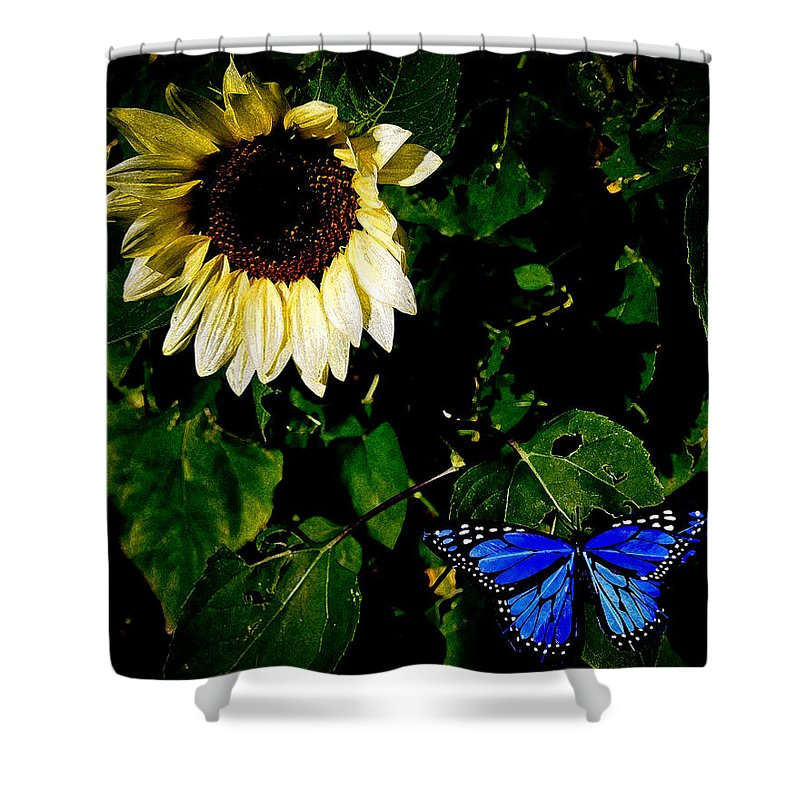 Sunflower Shower Curtain featuring the photograph Butterfly by Steve McKinzie
