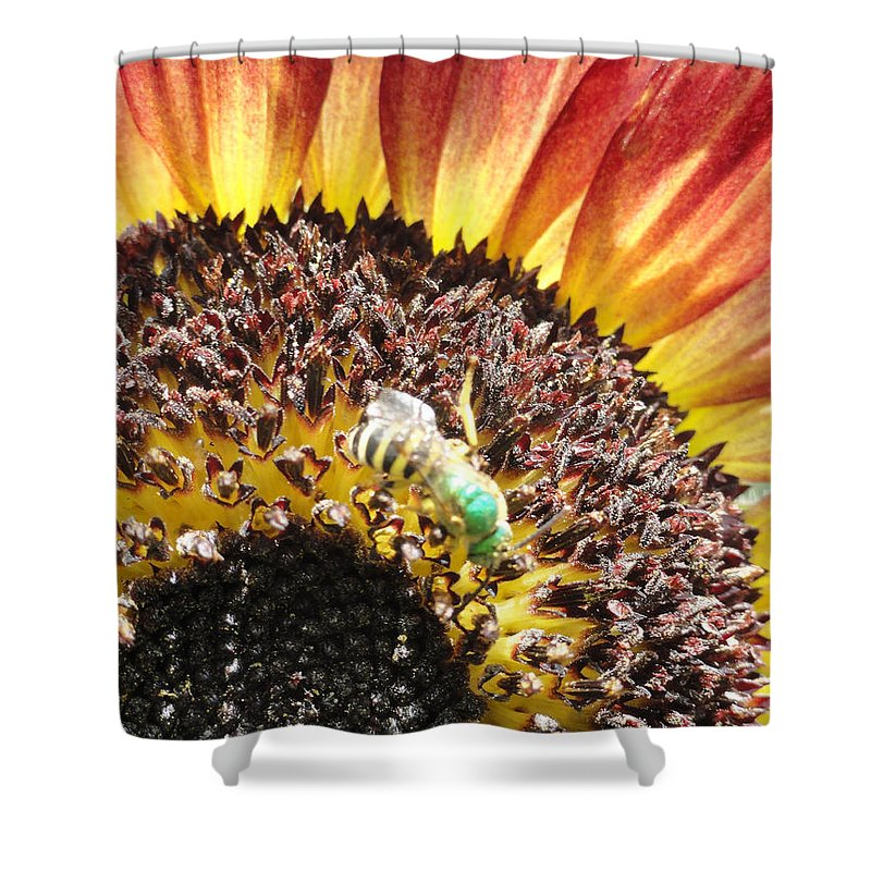 Bandon Beach Shower Curtain featuring the photograph Bzzzz by Trish Hale