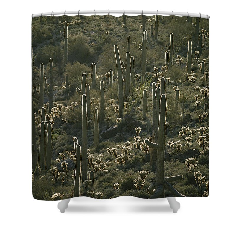 Plants Shower Curtain featuring the photograph Cacti Near Tucson, Arizona by Skip Brown