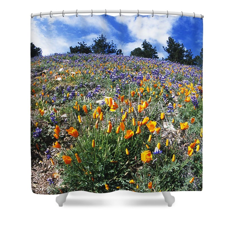 Usa Shower Curtain featuring the photograph California Poppies And Lupins On A Hill by James Forte