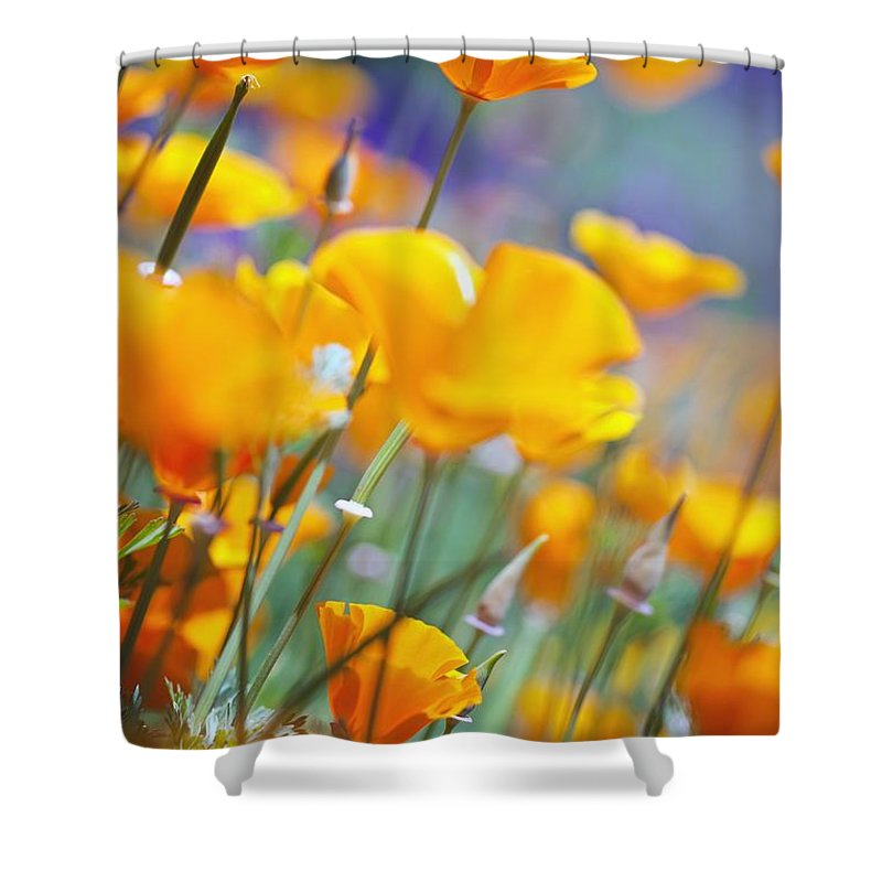 Poppy Shower Curtain featuring the photograph California Poppies by Craig Tuttle