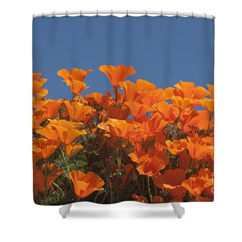 Sandra Bronstein Shower Curtain featuring the photograph California Poppies by Sandra Bronstein