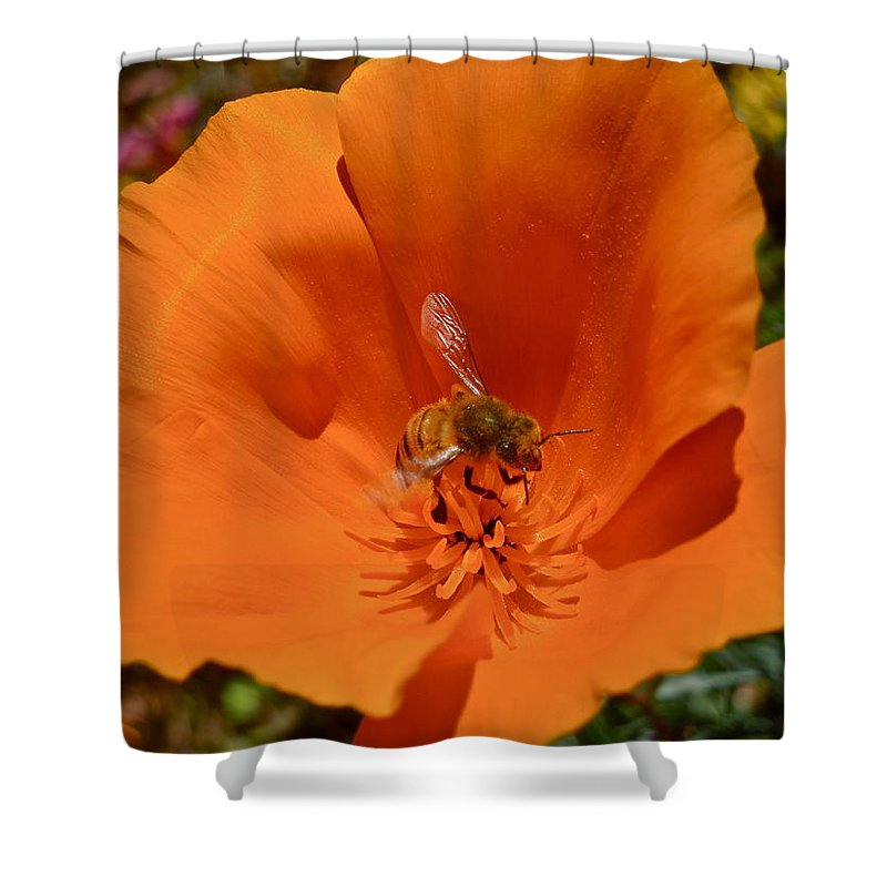 Flowers Shower Curtain featuring the photograph California Poppy by Diana Hatcher