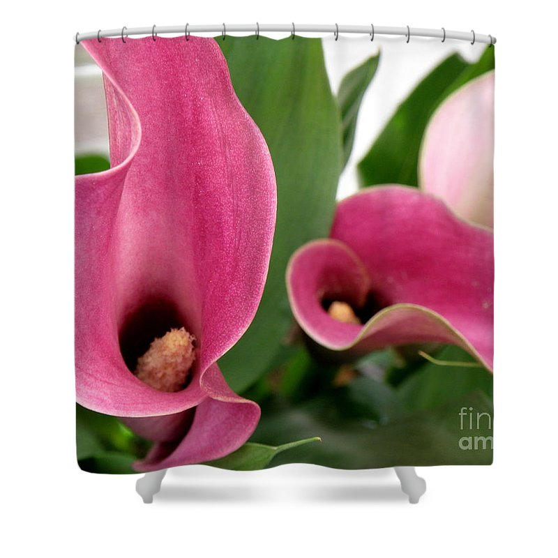 Floral Shower Curtain featuring the photograph Calla Lilies In Pink by Lainie Wrightson