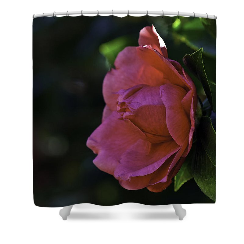 Camellia Shower Curtain featuring the photograph Camellia Twenty-five by Ken Frischkorn