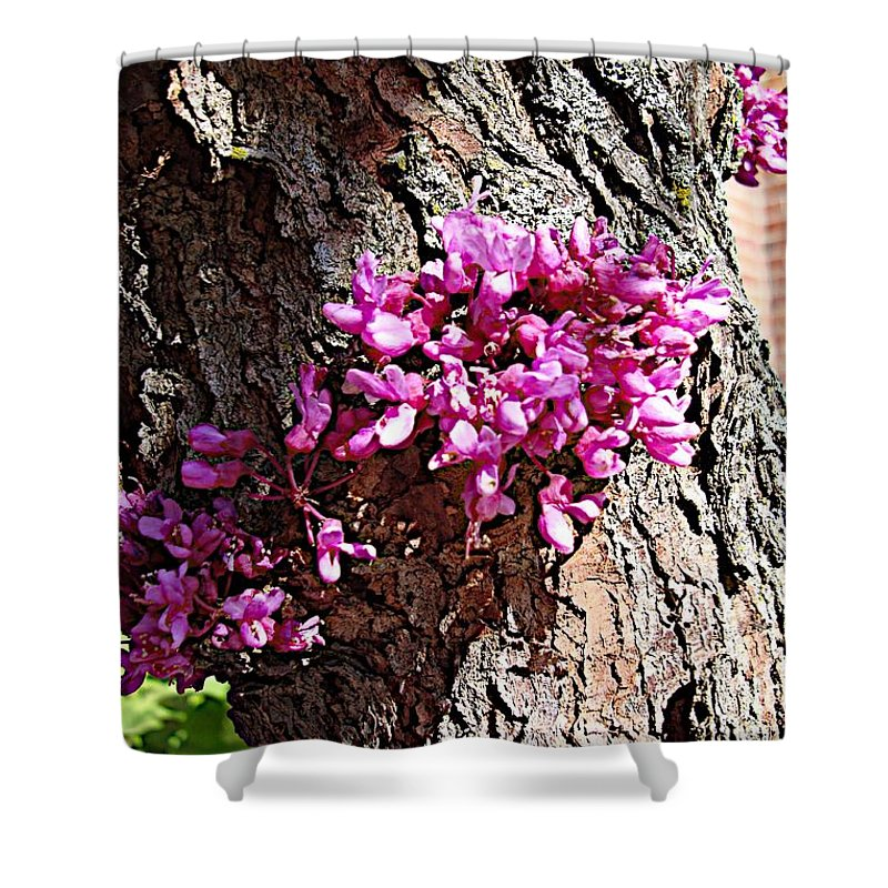 Blooms Shower Curtain featuring the photograph Campus by Joseph Yarbrough