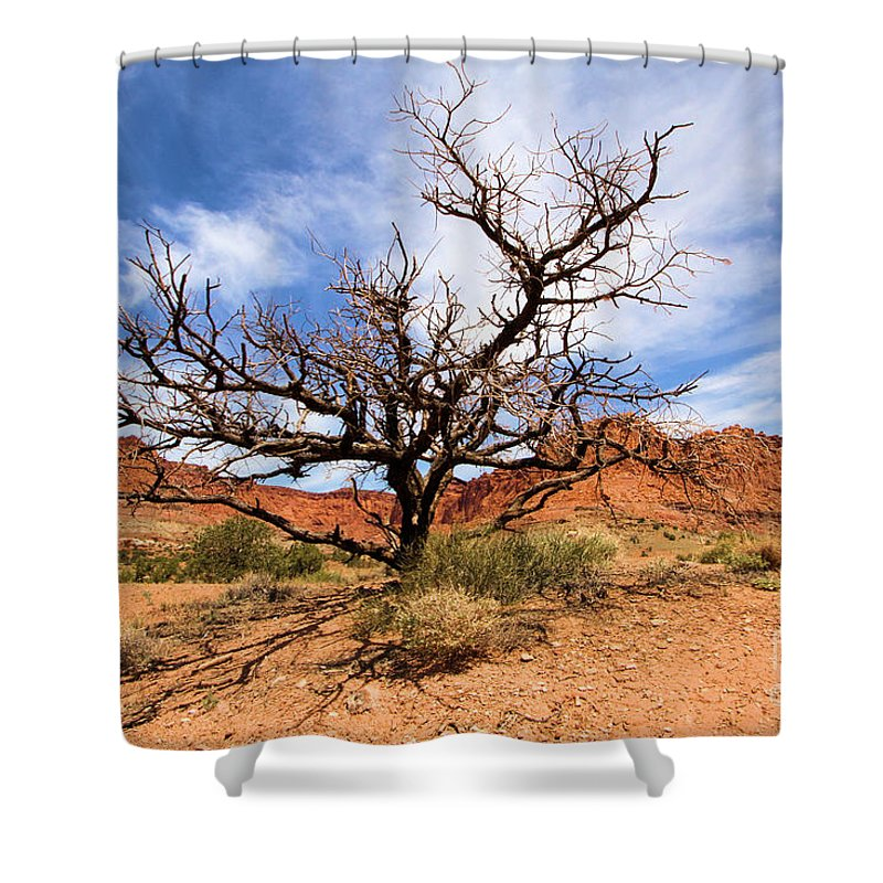 Dead Trees Shower Curtain featuring the photograph Capitol Tree by Adam Jewell