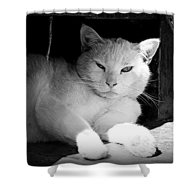 Cat Shower Curtain featuring the photograph White Cat by Alma Yamazaki