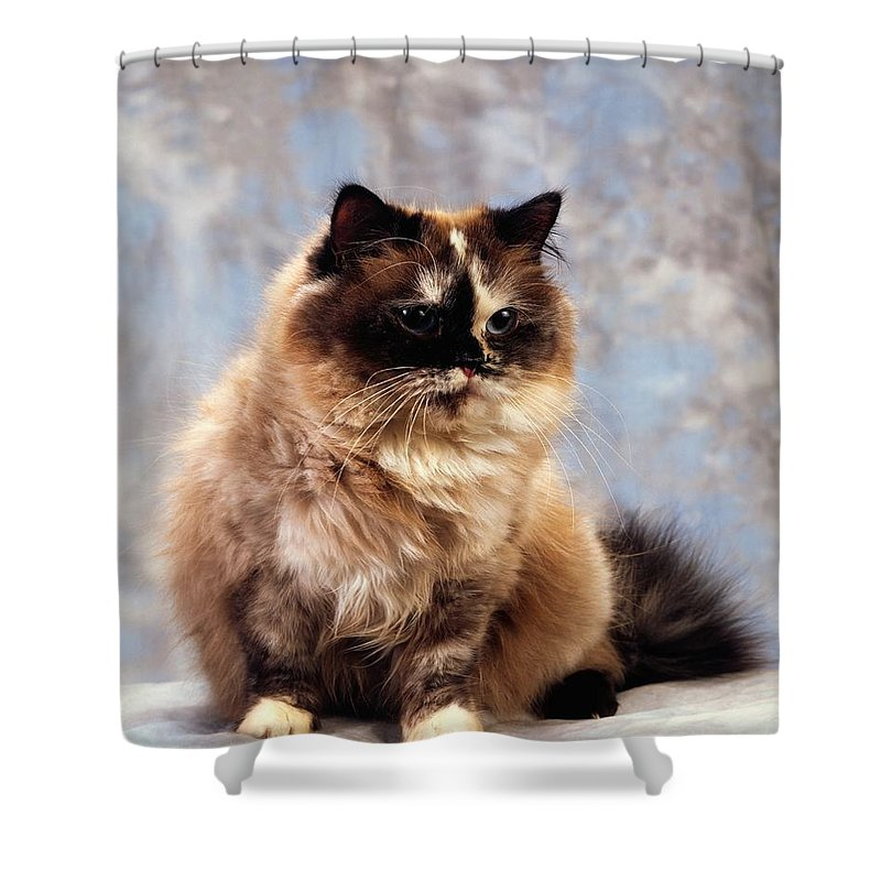 Color Shower Curtain featuring the photograph Cat Portrait Of A Cat by The Irish Image Collection