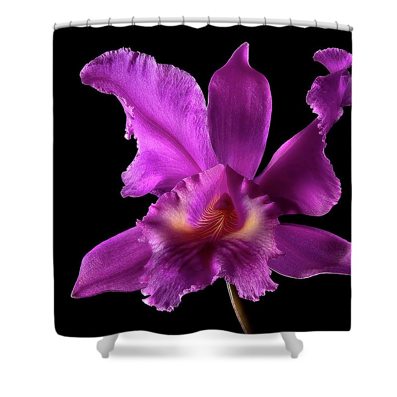 Flower Shower Curtain featuring the photograph Catalea Orchid by Endre Balogh