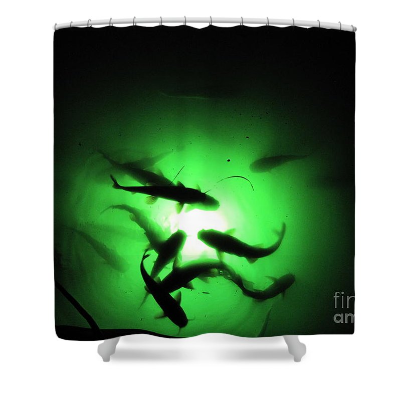 Catfish Shower Curtain featuring the photograph Catfish At Night by Jan Prewett