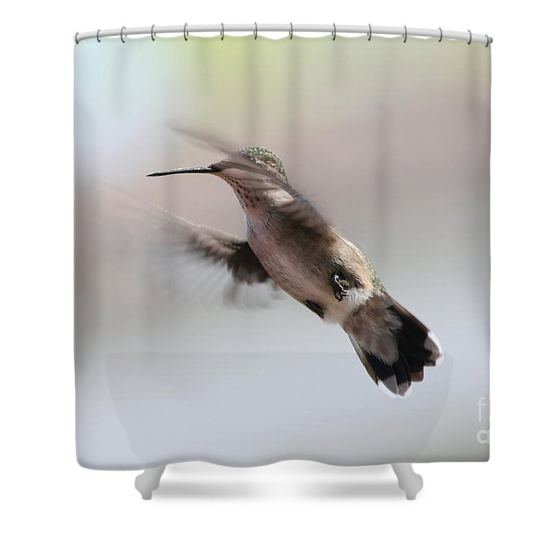 Hummingbirds Shower Curtain featuring the photograph Caught In Mid-air by Lori Tordsen