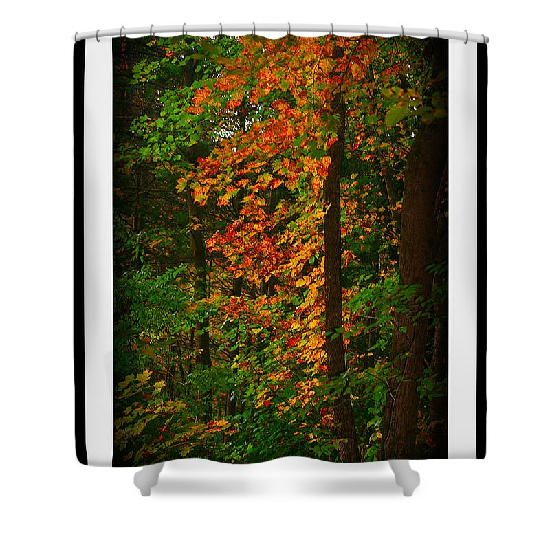 Changing Seasons Shower Curtain featuring the photograph Changing Seasons by Barbara S Nickerson