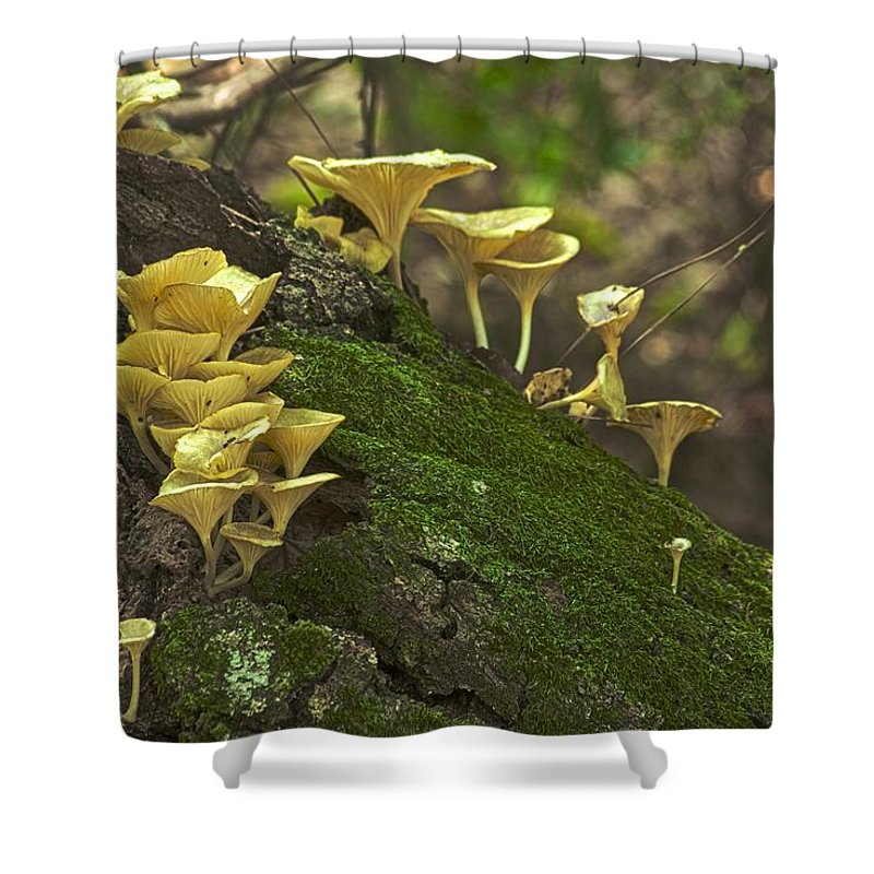 Autumn Shower Curtain featuring the photograph Chanterelles 8681 by Michael Peychich