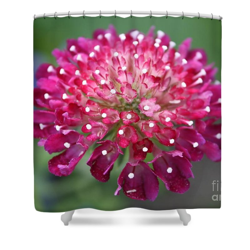 Flower Shower Curtain featuring the photograph Charlottenburg Palace Beauty by Carol Groenen