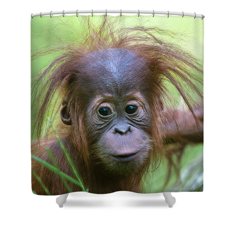 Asia Shower Curtain featuring the photograph Cheeky Monkey by Andrew Michael