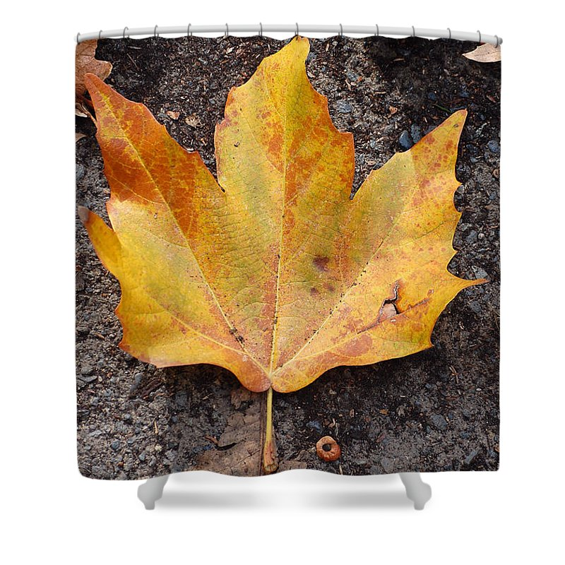 Cheerio Leaf Fall Ground Dirt Colors Chico Ca Shower Curtain featuring the photograph Cheerio Leaf by Holly Blunkall