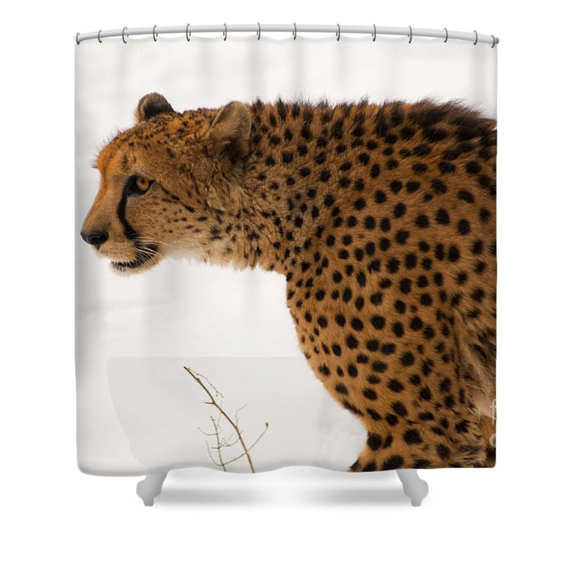 Acinonyx Shower Curtain featuring the photograph Cheetah by Andrew Michael