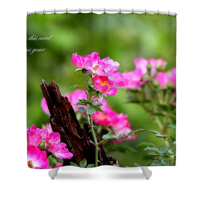 Flower Shower Curtain featuring the photograph Cherokee Rose Card - Flower by Travis Truelove