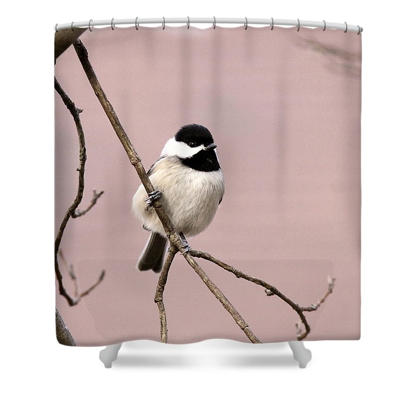 Shower Curtain featuring the photograph Chick In Pink by Travis Truelove