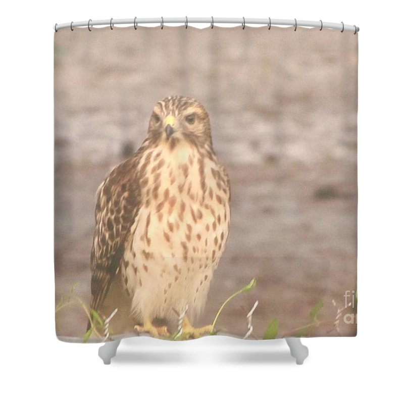 Hawk Shower Curtain featuring the photograph Chicken Hawk 1 by Michelle Powell