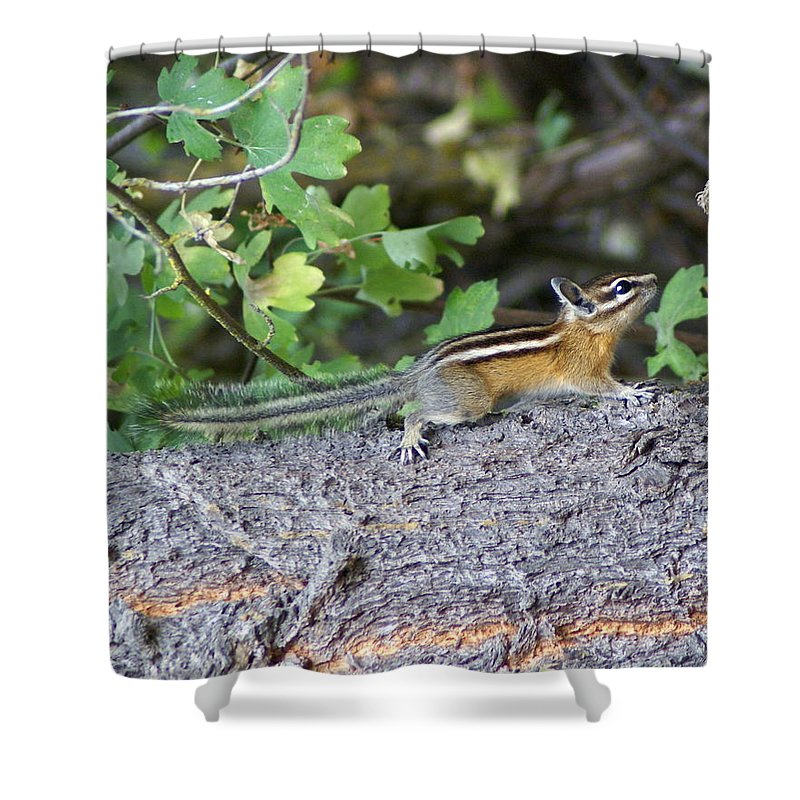 Chipmunks Shower Curtain featuring the photograph Chipmunk On A Log by Ben Upham III
