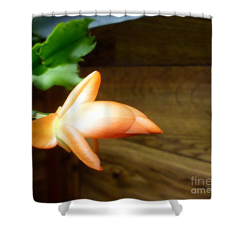 Christmas Shower Curtain featuring the photograph Christmas Cactus 'beach Dancer' by Renee Trenholm