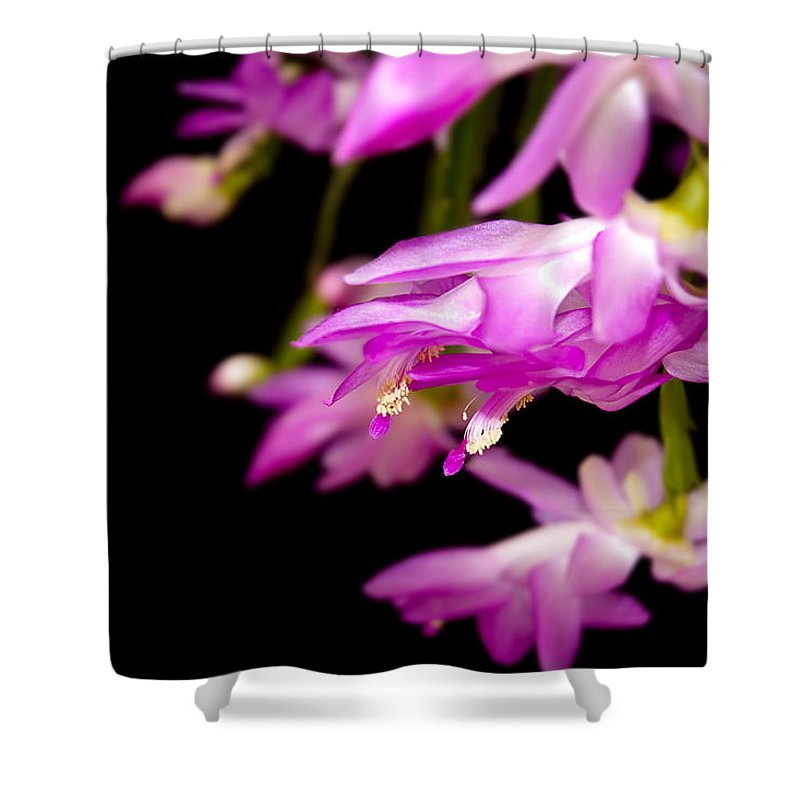 Christmas Cactus Shower Curtain featuring the photograph Christmas Cactus by Carolyn Marshall