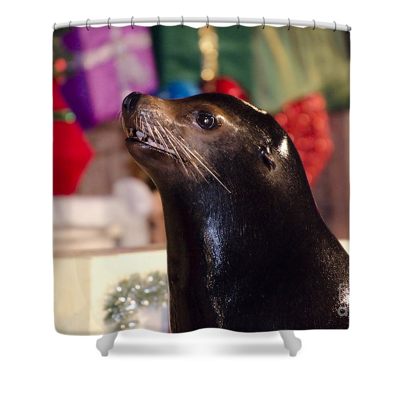 Sea Lion Shower Curtain featuring the photograph Christmas Sea Lion by Jim And Emily Bush