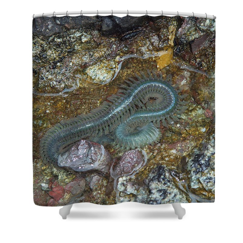 Fauna Shower Curtain featuring the photograph Clam Worm by Ted Kinsman