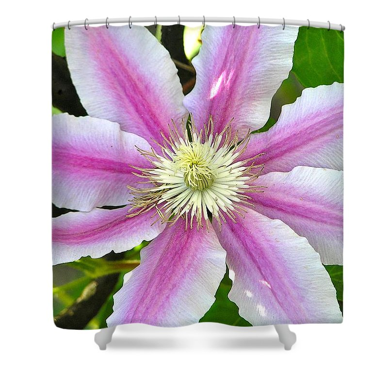 Macro Shower Curtain featuring the photograph Clematis Blossom by Constance Sanders