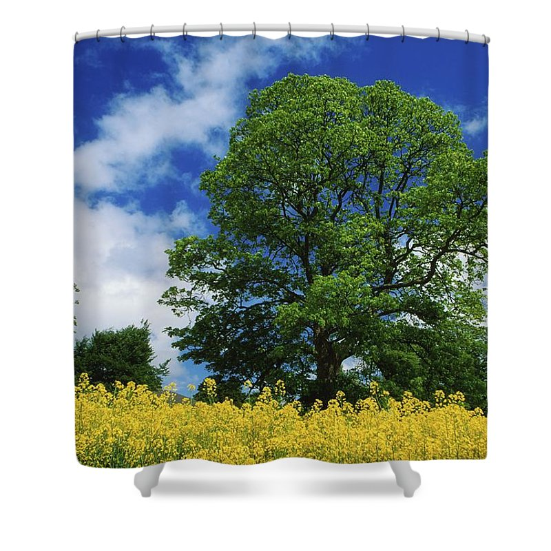 Oilseed Rape Shower Curtain featuring the photograph Clonmel, County Tipperary, Ireland by Richard Cummins