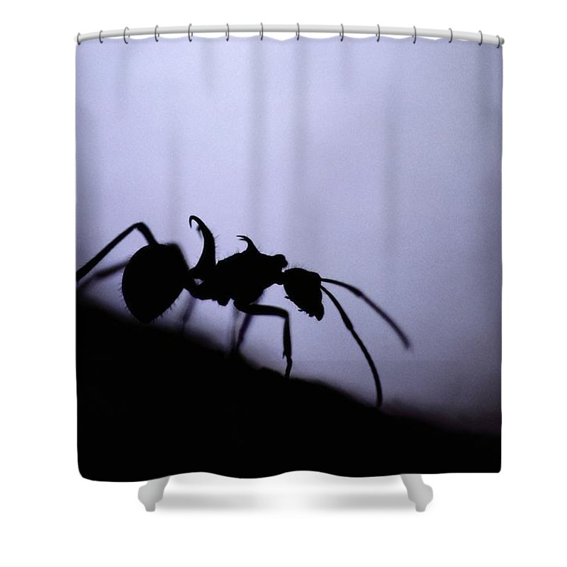 Borneo Island Shower Curtain featuring the photograph Close-up Of A Silhouetted Ant by Mattias Klum