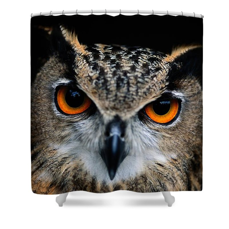 Animals Shower Curtain featuring the photograph Close Up Of An African Eagle Owl by Joel Sartore