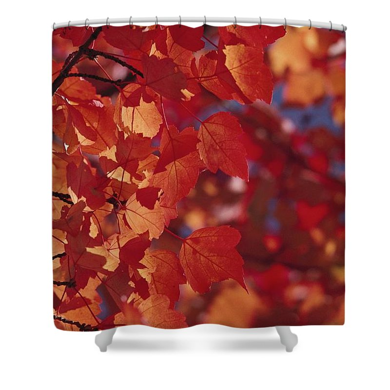 North America Shower Curtain featuring the photograph Close-up Of Autumn Leaves by Raymond Gehman