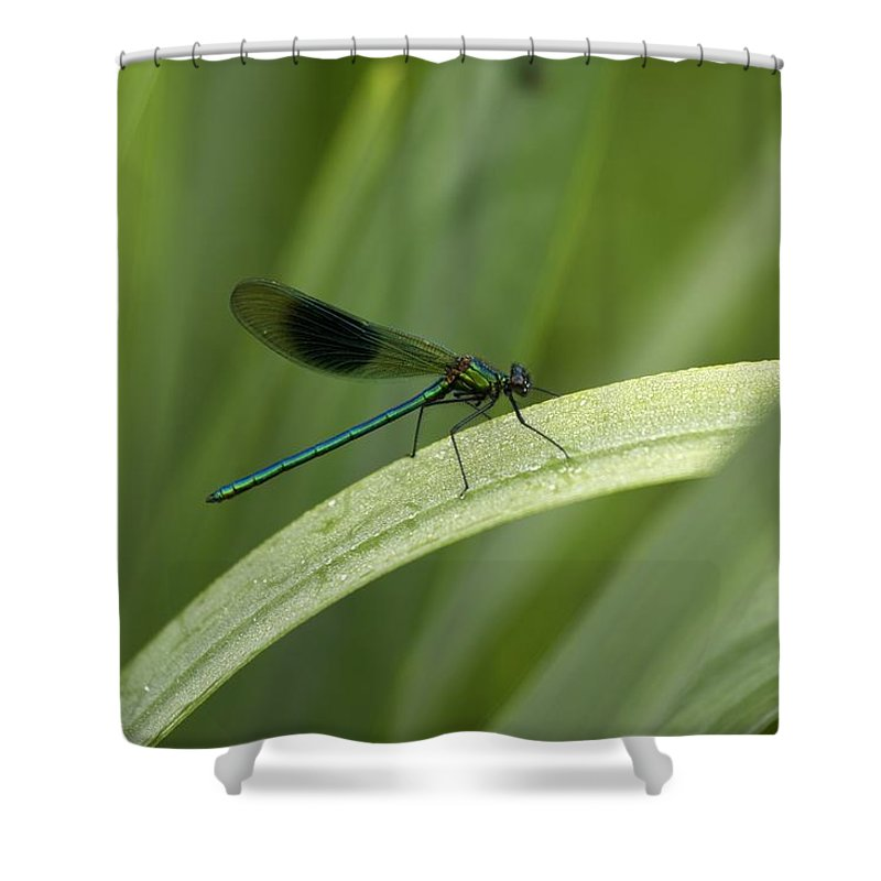 Day Shower Curtain featuring the photograph Close-up Of Dragonfly Perched On Leaf by Peter McCabe