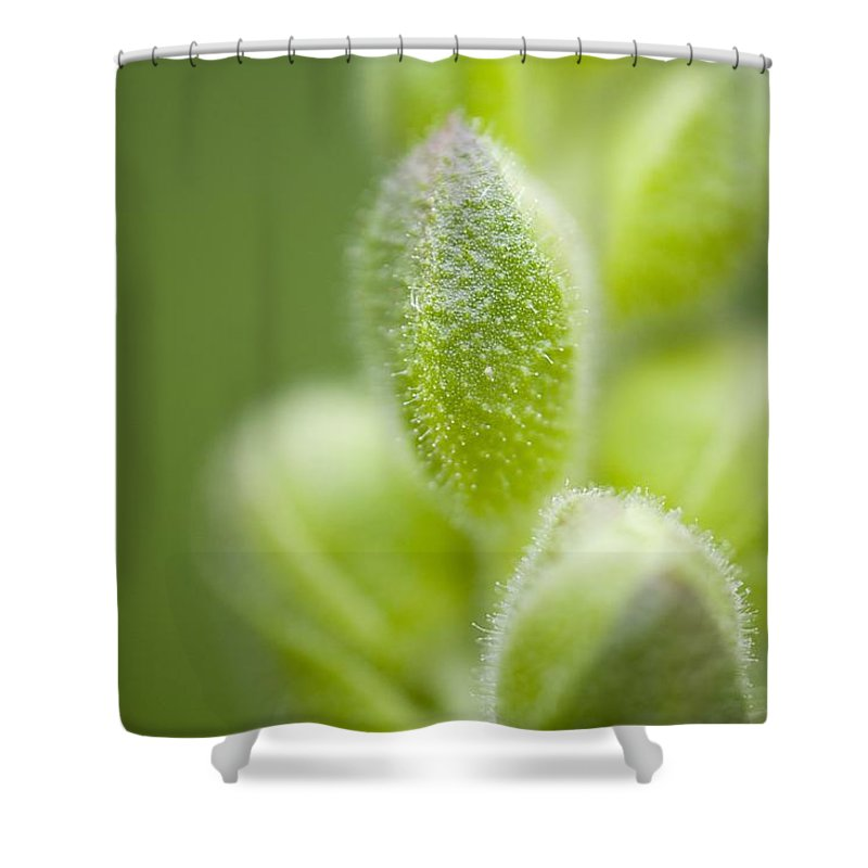 Beauty In Nature Shower Curtain featuring the photograph Close-up Of Flower Buds by Craig Tuttle