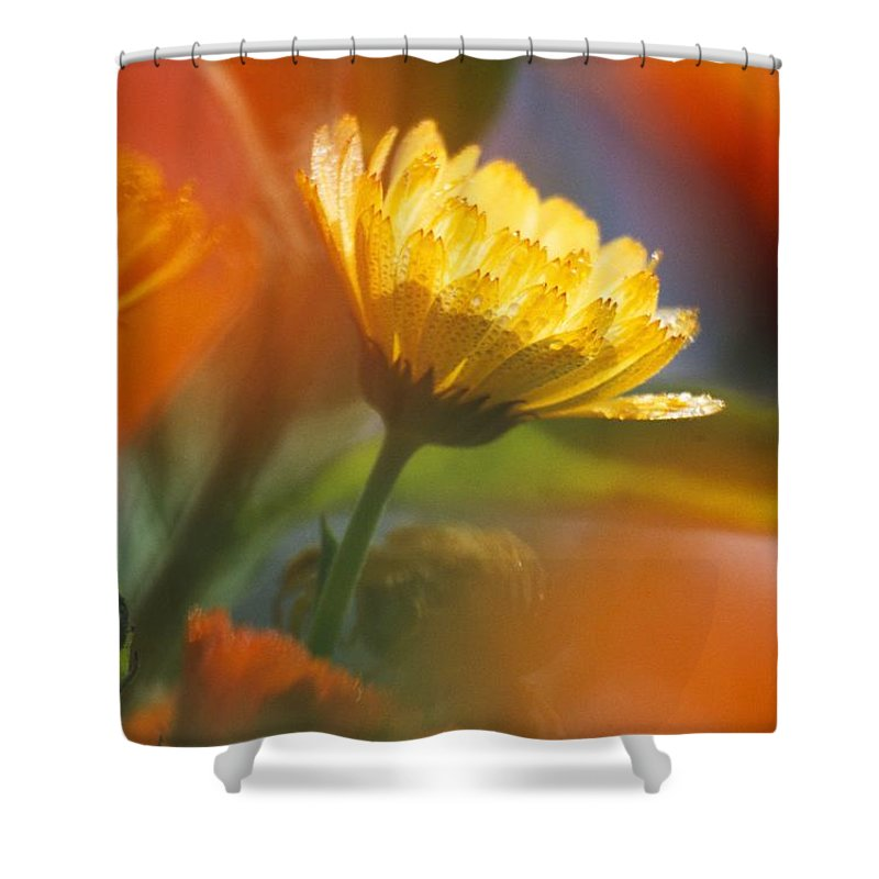 Plant Shower Curtain featuring the photograph Close-up Of Wildflower by Natural Selection Craig Tuttle