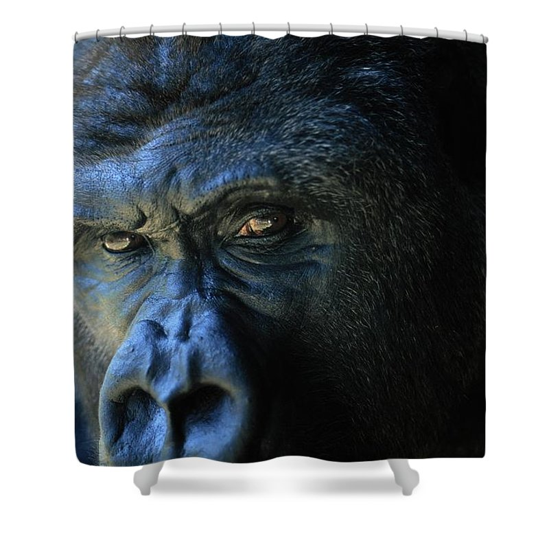 Animals Shower Curtain featuring the photograph Close View Of A Gorilla Gorilla Gorilla by Joel Sartore
