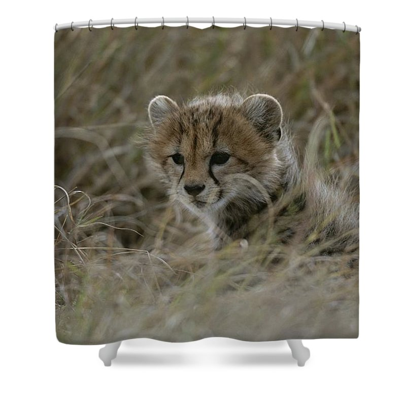 Africa Shower Curtain featuring the photograph Close View Of A Juvenile Cheetah by Roy Toft