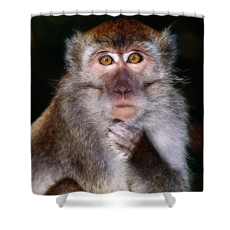 Borneo Island Shower Curtain featuring the photograph Close View Of A Long-tailed Macaque by Mattias Klum