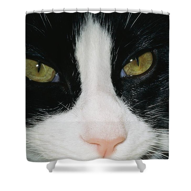 Germantown Shower Curtain featuring the photograph Close View Of Black And White Tabby Cat by Brian Gordon Green