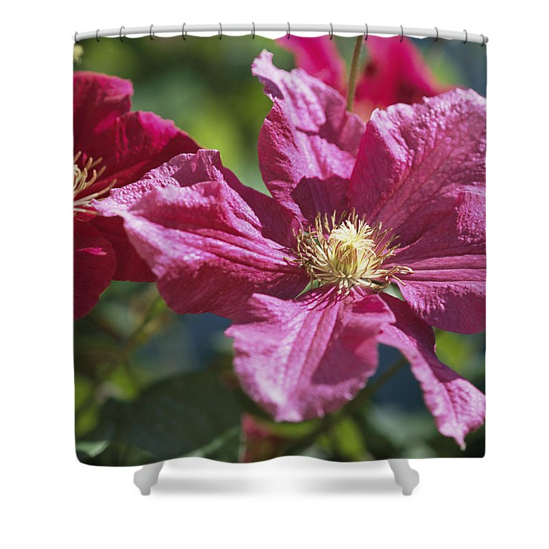 Plants Shower Curtain featuring the photograph Close View Of Clematis Flowers by Darlyne A. Murawski